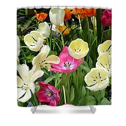 Open Tulips Shower Curtain by Kathleen Struckle