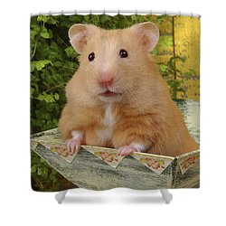 Orange Hamster Ha106 Shower Curtain by Greg Cuddiford