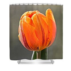 Orange Red Tulip Square Shower Curtain by Sandi OReilly