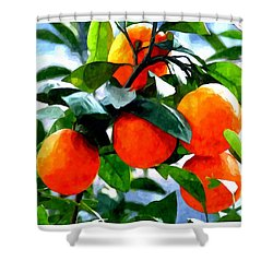 Orange Tree In Springtime  Shower Curtain by Lanjee Chee