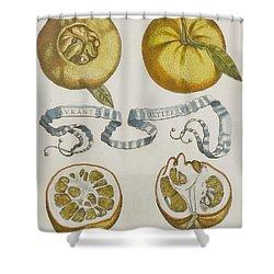 Oranges Shower Curtain by Cornelis Bloemaert