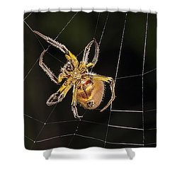 Orb-weaver Spider In Web Panguana Shower Curtain by Konrad Wothe