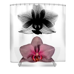 Orchid And Its X-ray Shower Curtain by Bert Myers