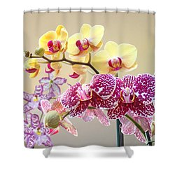 Orchid Art Prints Orchids Flowers Floral Bouquets Shower Curtain by Baslee Troutman