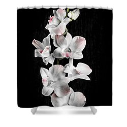 Orchid Flowers On Black Shower Curtain by Elena Elisseeva