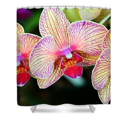 Orchid Trio Shower Curtain by Kathleen Struckle