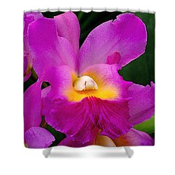 Orchid Variations 1 Shower Curtain by Rona Black