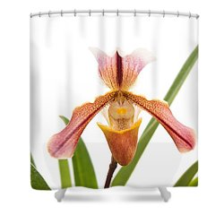 Orchid - Will The Slipper Fit  Shower Curtain by Mike Savad