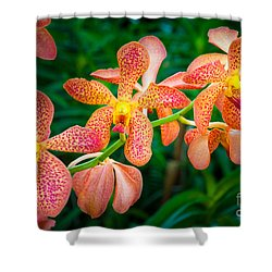 Orchids Shower Curtain by Inge Johnsson