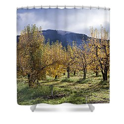 Oregon Orchard Shower Curtain by Peter French