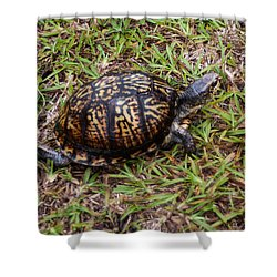 Box Turtle Shower Curtain by Mechala  Matthews