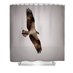 Osprey Shower Curtain by Ernie Echols