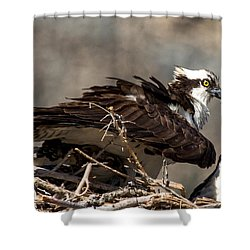 Osprey Family Huddle Shower Curtain by John Daly