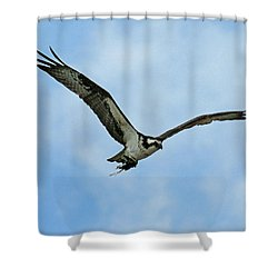 Osprey Nest Building Shower Curtain by Ernie Echols