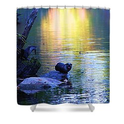 Otter Family Shower Curtain by Dan Sproul