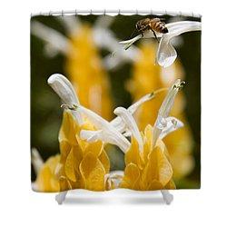 Pachystachys Lutea - Lollipop Plant - Golden Candle - Shrimp Plant Shower Curtain by Sharon Mau