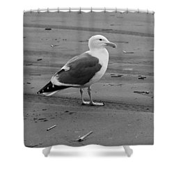 Pacific Seagull In Black And White Shower Curtain by Jeanette C Landstrom