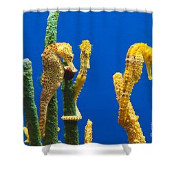 Pacific Seahorses Hippocampus Ingens Are Among The Giants Of Their World Shower Curtain by Jamie Pham