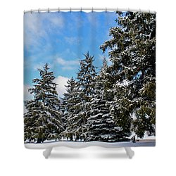 Painted Pines Shower Curtain by Frozen in Time Fine Art Photography