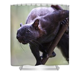 Panamanian Tree Squirrel Shower Curtain by Heiko Koehrer-Wagner