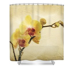 Paper Flowers Shower Curtain by Donna Blackhall