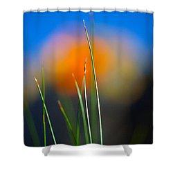 Papyrus Shower Curtain by Joe Schofield