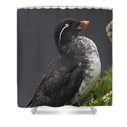 Parakeet Auklet Sitting In Green Shower Curtain by Milo Burcham