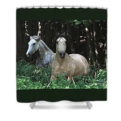 Paso Fino Mares Pay Attention Shower Curtain by Patricia Keller
