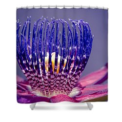 Passiflora Alata - Ruby Star - Ouvaca - Fragrant Granadilla -  Winged-stem Passion Flower Shower Curtain by Sharon Mau