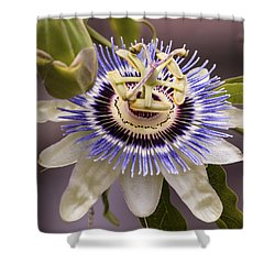 Passiflora Caerulea Shower Curtain by Caitlyn  Grasso