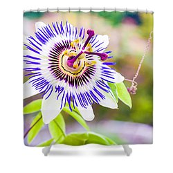 Passiflora Or Passion Flower Shower Curtain by Semmick Photo