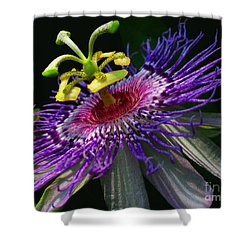 Passion Flower Shower Curtain by Douglas Stucky