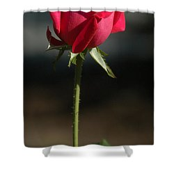 Passionate Lady Shower Curtain by Penny Lisowski