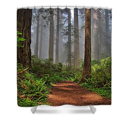 Path Thru The Redwoods Shower Curtain by Michael  Ayers