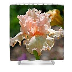 Peach-colored Iris Shower Curtain by Karen Adams