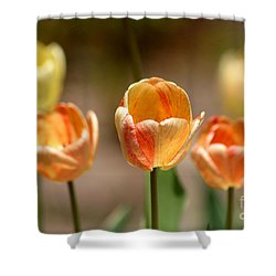 Peaches And Cream Shower Curtain by Living Color Photography Lorraine Lynch