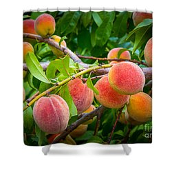 Peaches Shower Curtain by Inge Johnsson