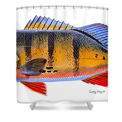 Peacock Bass Shower Curtain by Carey Chen