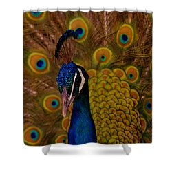 Peacock Shower Curtain by Jeff Swan