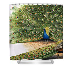 Peacocks Shower Curtain by RB Davis