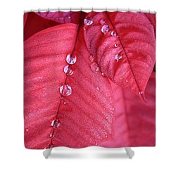 Pearls On Poinsettia Shower Curtain by Carol Groenen