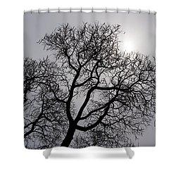 Pearly Silver Filigree On The Sky  Shower Curtain by Georgia Mizuleva