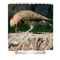 Pecking Flicker Shower Curtain by Lori Pessin Lafargue