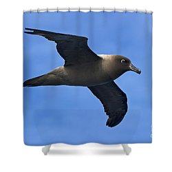 Pelagic Seabird... Shower Curtain by Nina Stavlund