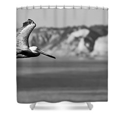 Pelican In Black And White Shower Curtain by Sebastian Musial