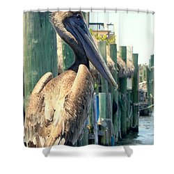 Pelican On A Post Shower Curtain by Dorothy Menera