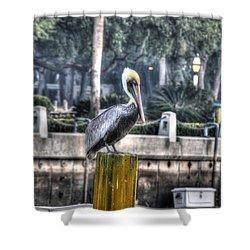 Pelican On Water Post Shower Curtain by Dan Friend