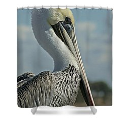 Pelican Profile 3 Shower Curtain by Ernie Echols