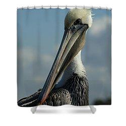 Pelican Profile Shower Curtain by Ernie Echols