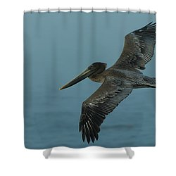 Pelican Shower Curtain by Sebastian Musial